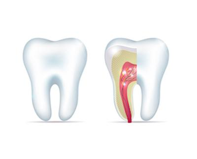 Root Canals in Midwest City OK | A Cross Section of A Tooth and Its Root